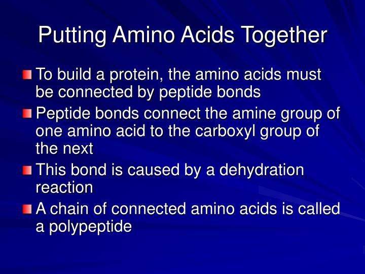 Putting Amino Acids Together