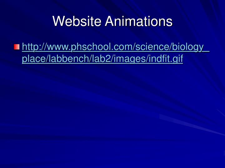 Website Animations