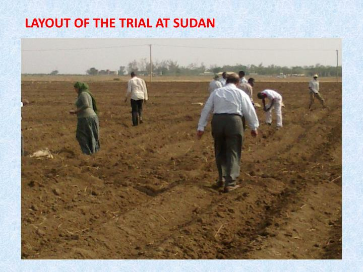 LAYOUT OF THE TRIAL AT SUDAN