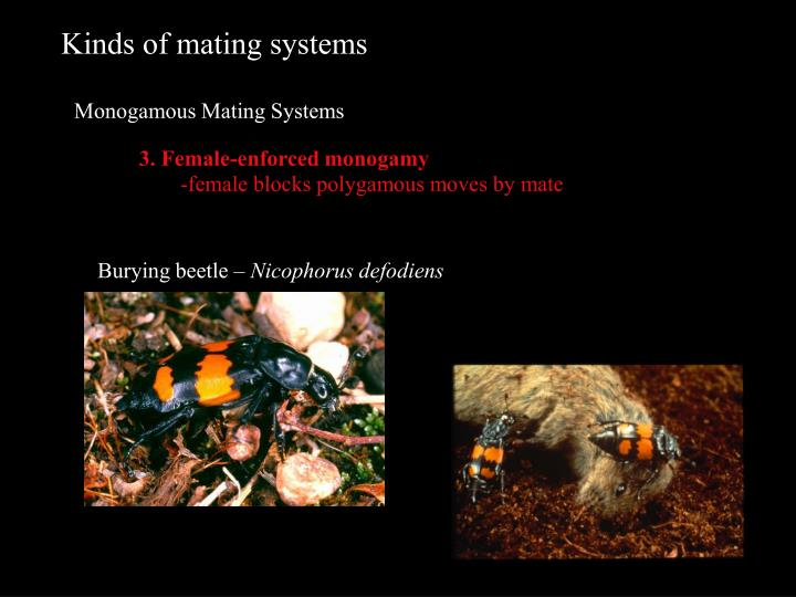 Kinds of mating systems