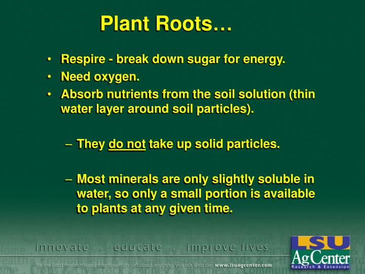 Plant Roots…