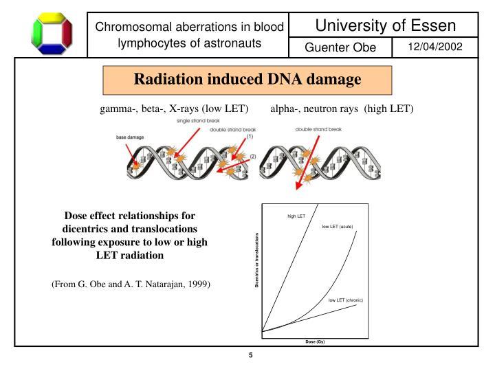 Radiation induced DNA damage