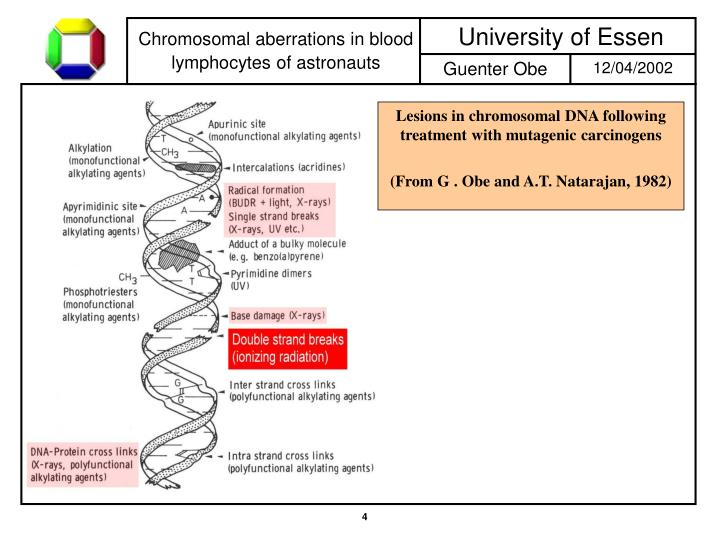 Lesions in chromosomal DNA following treatment with mutagenic carcinogens