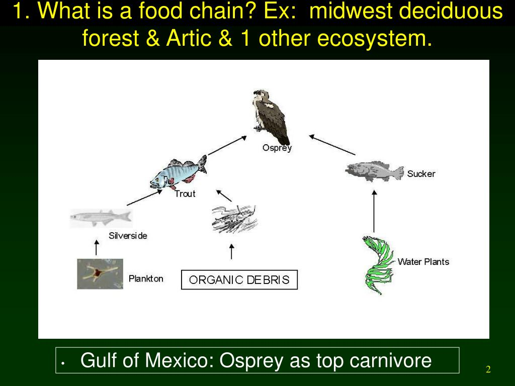 1. What is a food chain? Ex:  midwest deciduous forest & Artic & 1 other ecosystem.