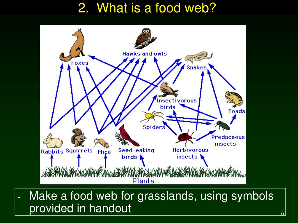 2.  What is a food web?