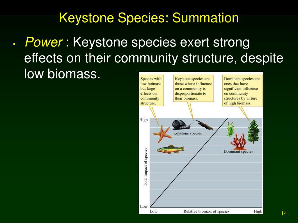 Keystone Species: Summation