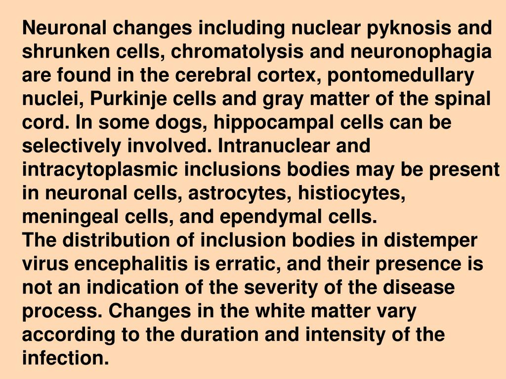 Neuronal changes including nuclear pyknosis and shrunken cells, chromatolysis and neuronophagia are found in the cerebral cortex, pontomedullary nuclei, Purkinje cells and gray matter of the spinal cord. In some dogs, hippocampal cells can be selectively involved. Intranuclear and intracytoplasmic inclusions bodies may be present in neuronal cells, astrocytes, histiocytes, meningeal cells, and ependymal cells.