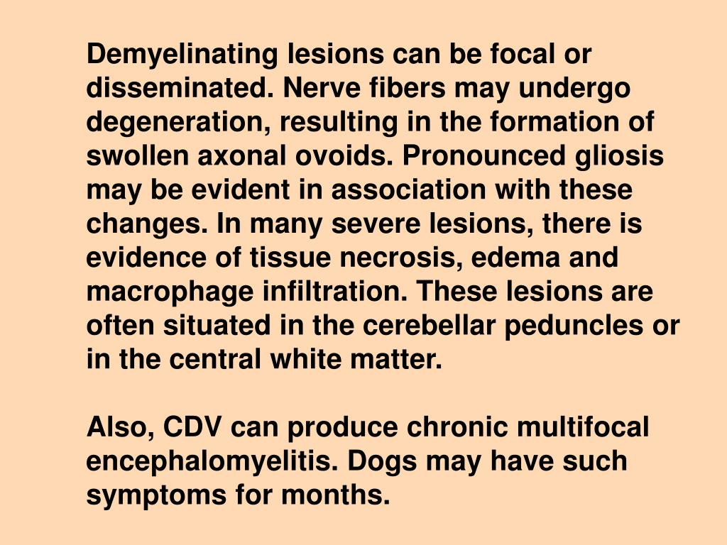 Demyelinating lesions can be focal or disseminated. Nerve fibers may undergo degeneration, resulting in the formation of swollen axonal ovoids. Pronounced gliosis may be evident in association with these changes. In many severe lesions, there is evidence of tissue necrosis, edema and macrophage infiltration. These lesions are often situated in the cerebellar peduncles or in the central white matter.