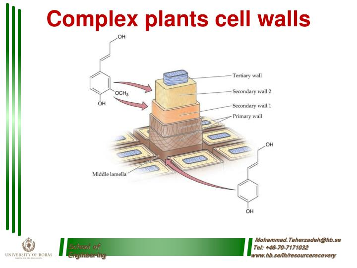 Complex plants cell walls