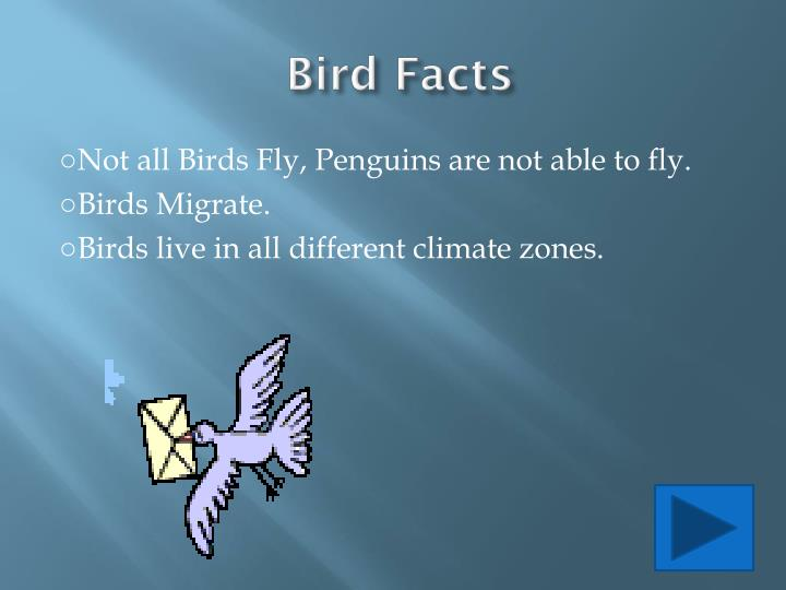 Bird facts l.jpg