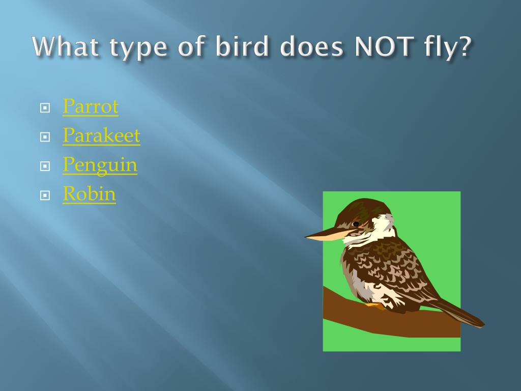 What type of bird does NOT fly?