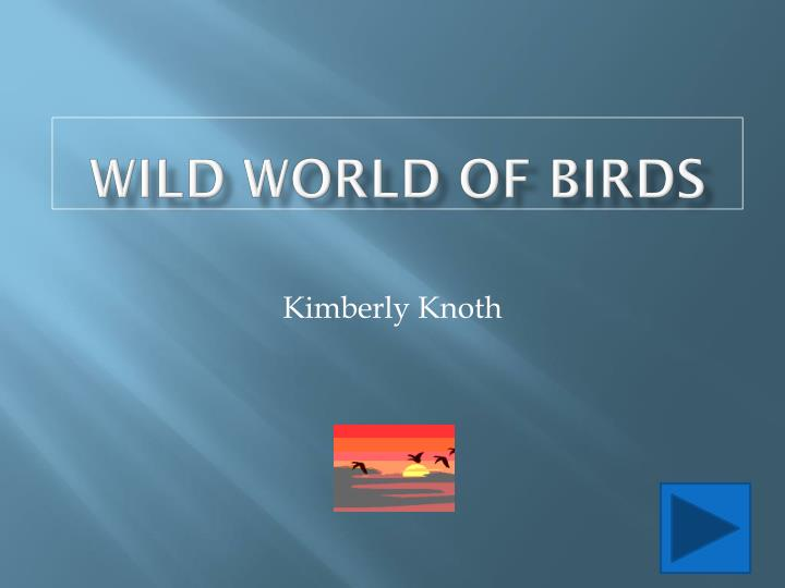 Wild world of birds l.jpg