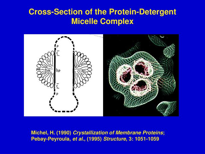 Cross-Section of the Protein-Detergent Micelle Complex