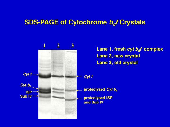 SDS-PAGE of Cytochrome