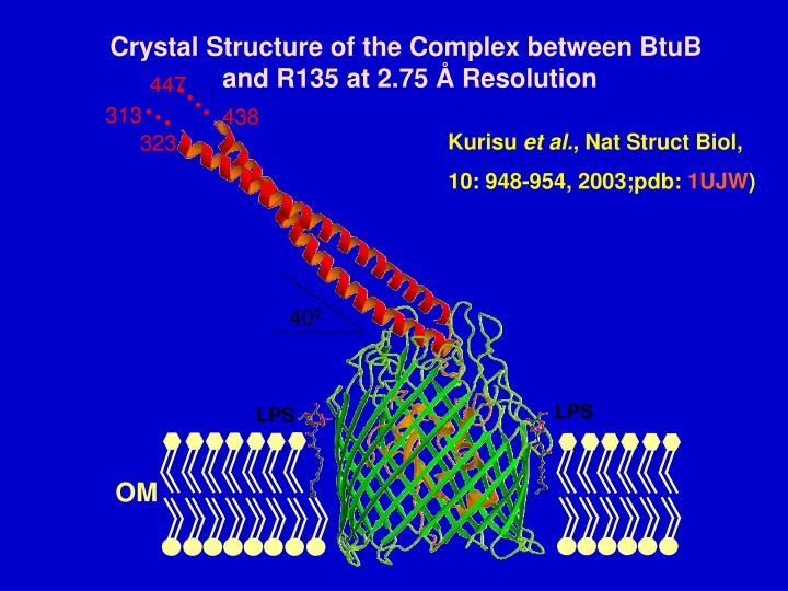 Crystal Structure of the Complex between BtuB