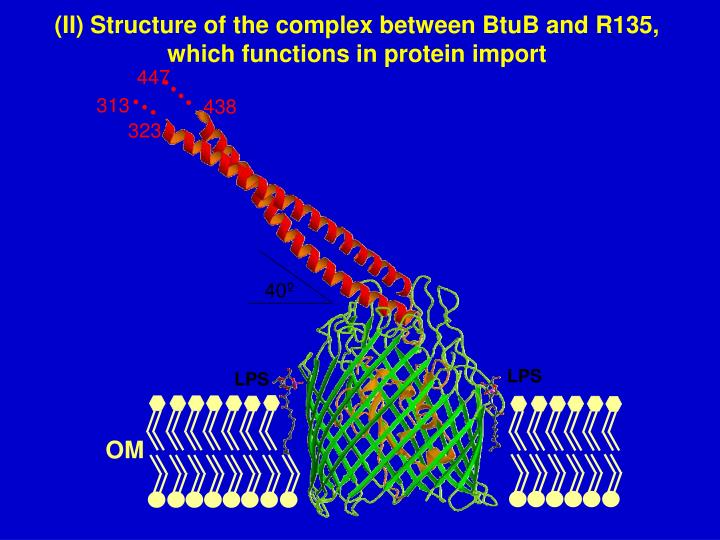 (II) Structure of the complex between BtuB and R135,   which functions in protein import
