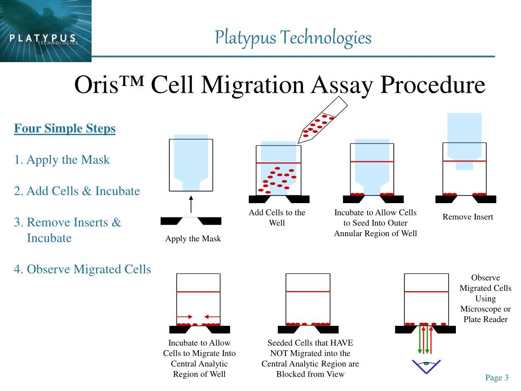 Observe Migrated Cells Using Microscope or Plate Reader