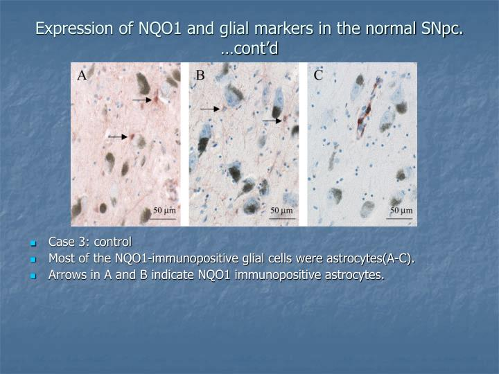 Expression of NQO1 and glial markers in the normal SNpc. …cont'd