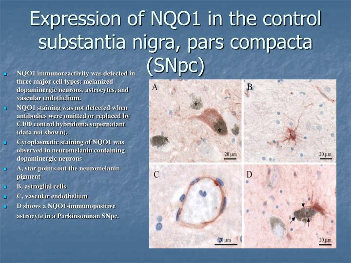 Expression of NQO1 in the control substantia nigra, pars compacta (SNpc)
