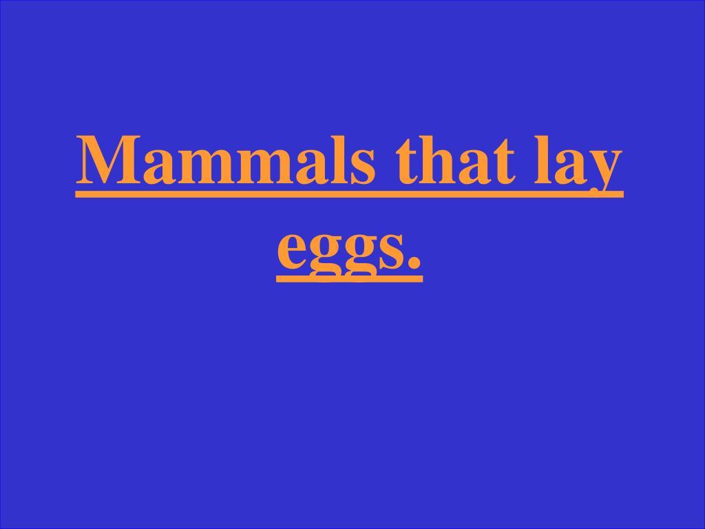 Mammals that lay eggs.