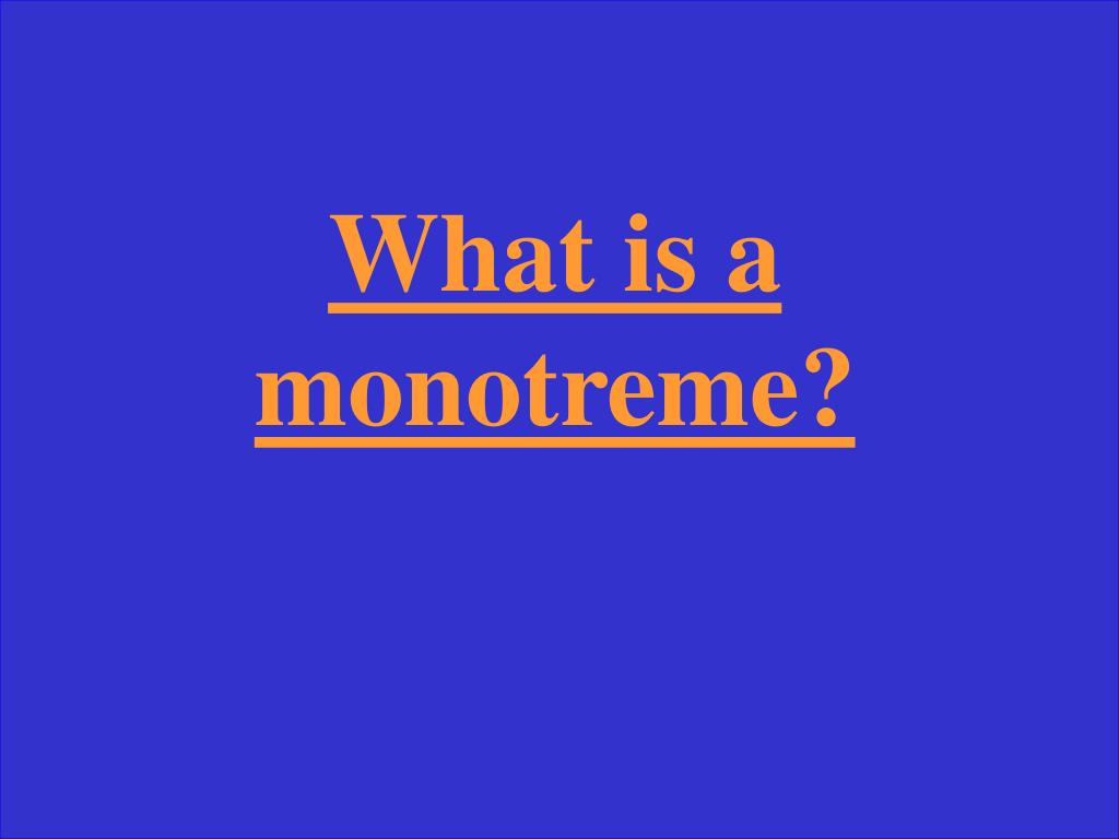 What is a monotreme?