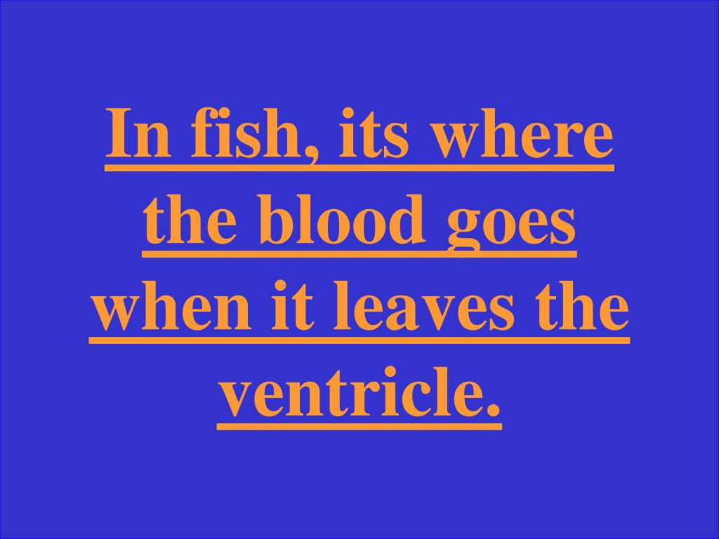 In fish, its where the blood goes when it leaves the ventricle.