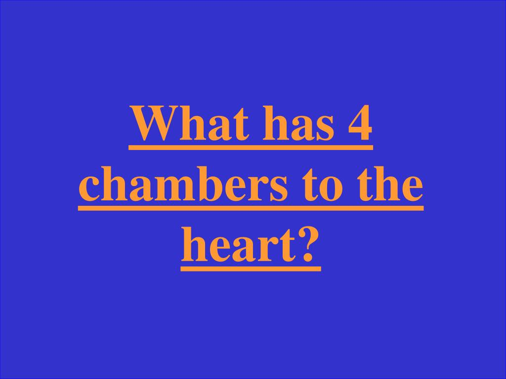 What has 4 chambers to the heart?