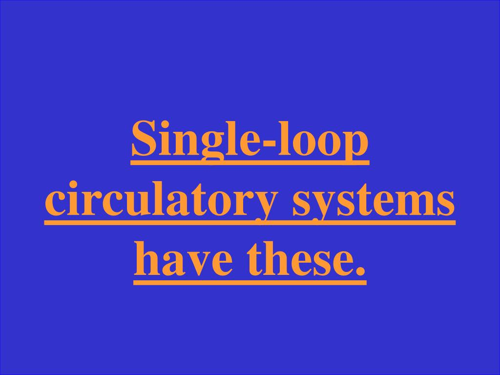 Single-loop circulatory systems have these.