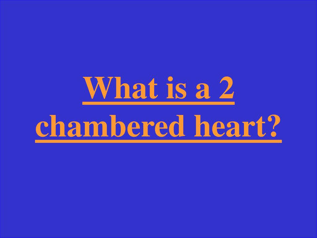What is a 2 chambered heart?