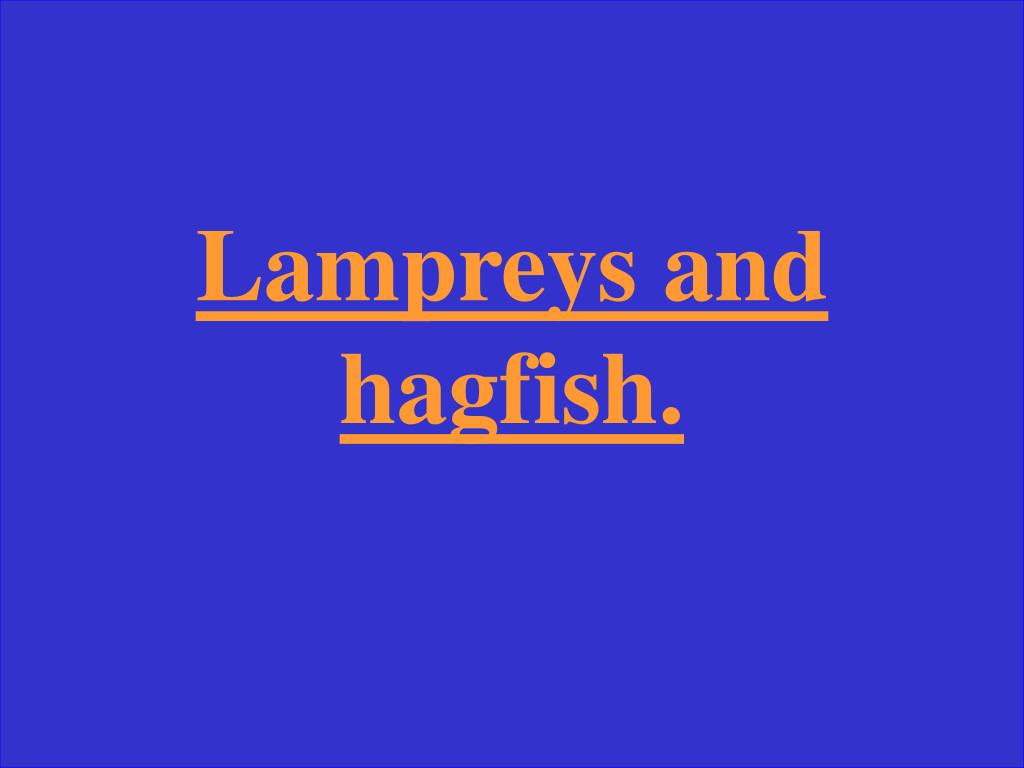 Lampreys and hagfish.