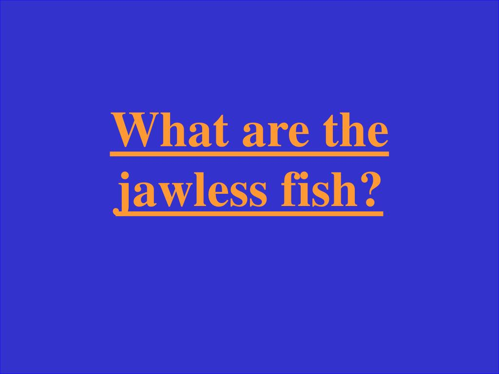 What are the jawless fish?