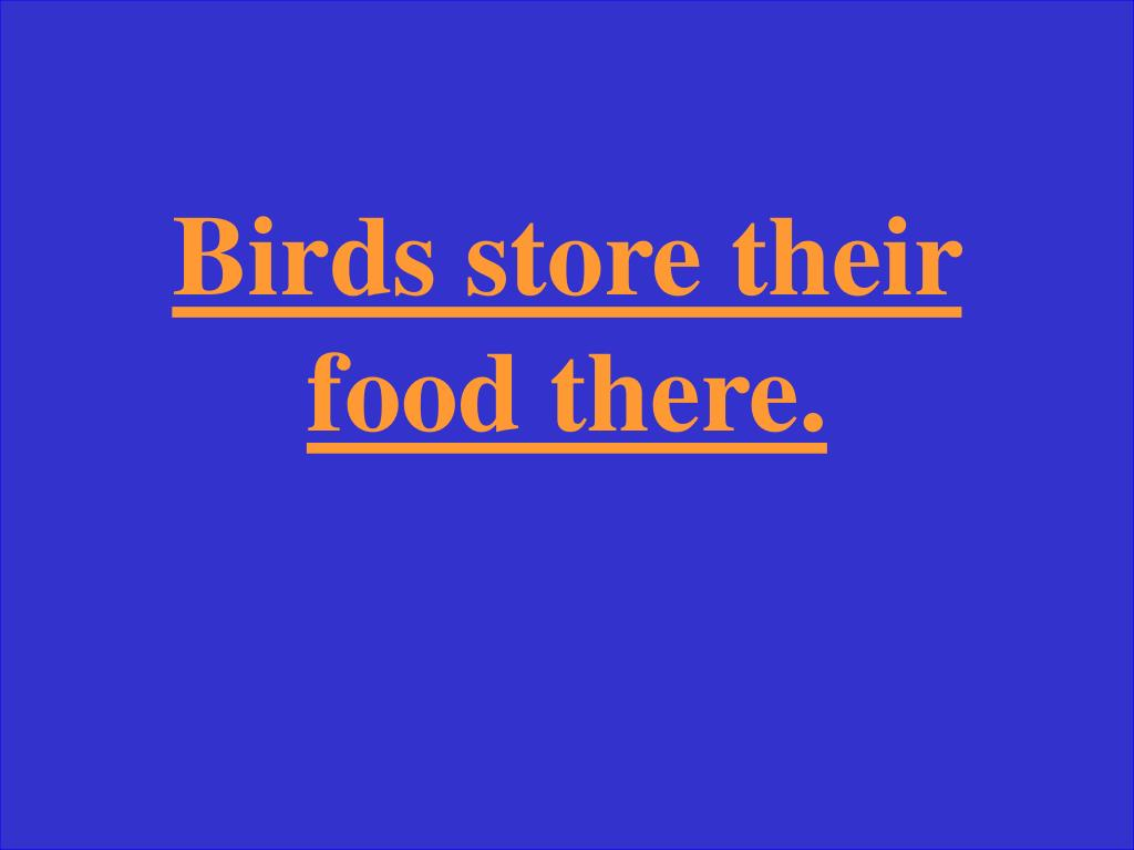 Birds store their food there.
