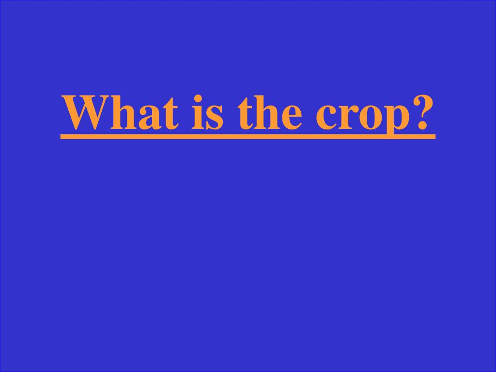 What is the crop?