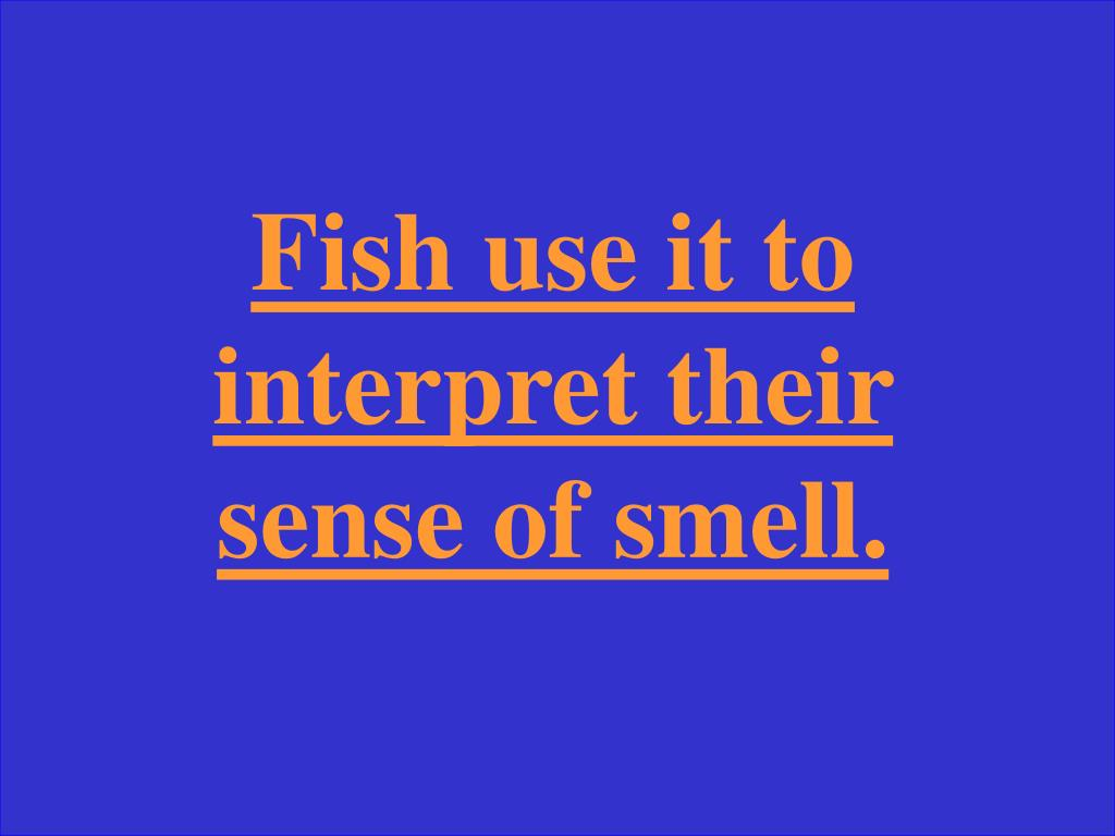 Fish use it to interpret their sense of smell.
