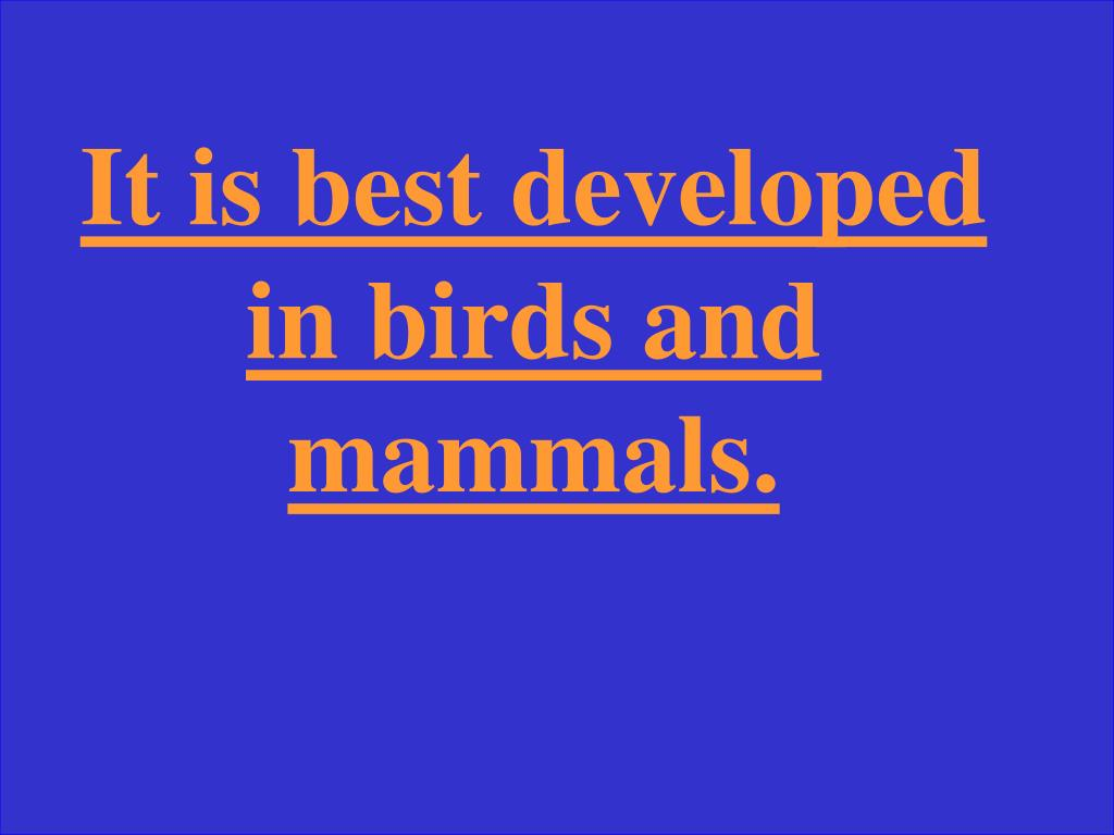 It is best developed in birds and mammals.