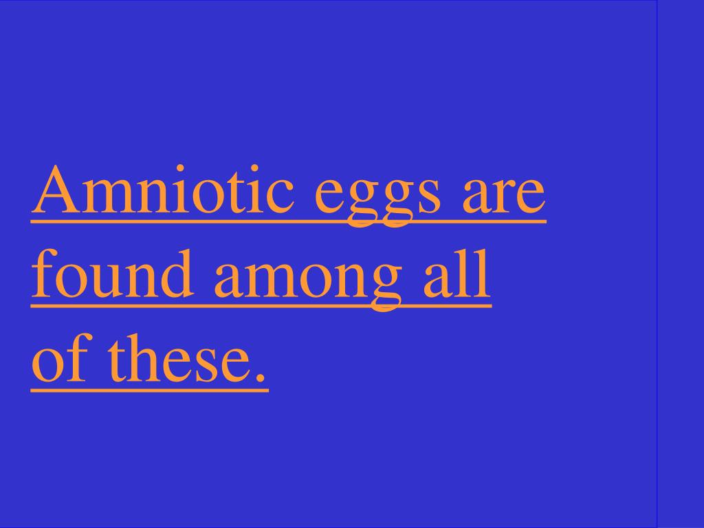 Amniotic eggs are found among all of these.