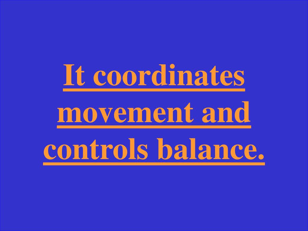 It coordinates movement and controls balance.