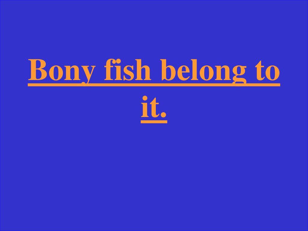 Bony fish belong to it.