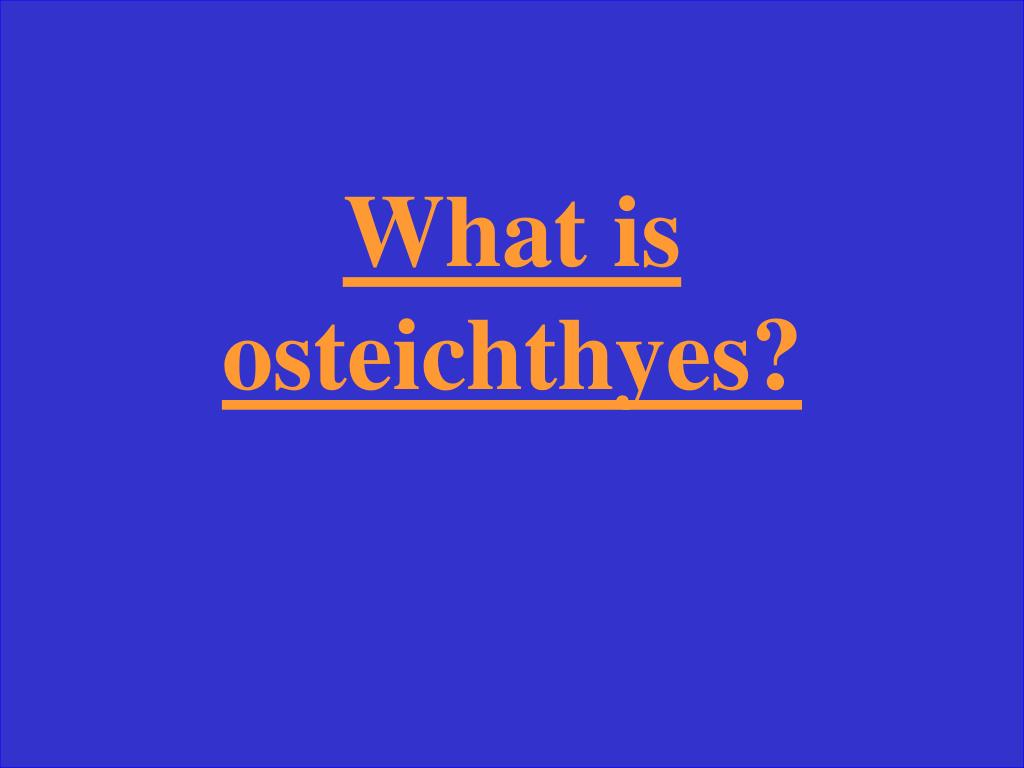 What is osteichthyes?