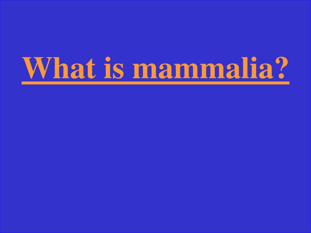What is mammalia?