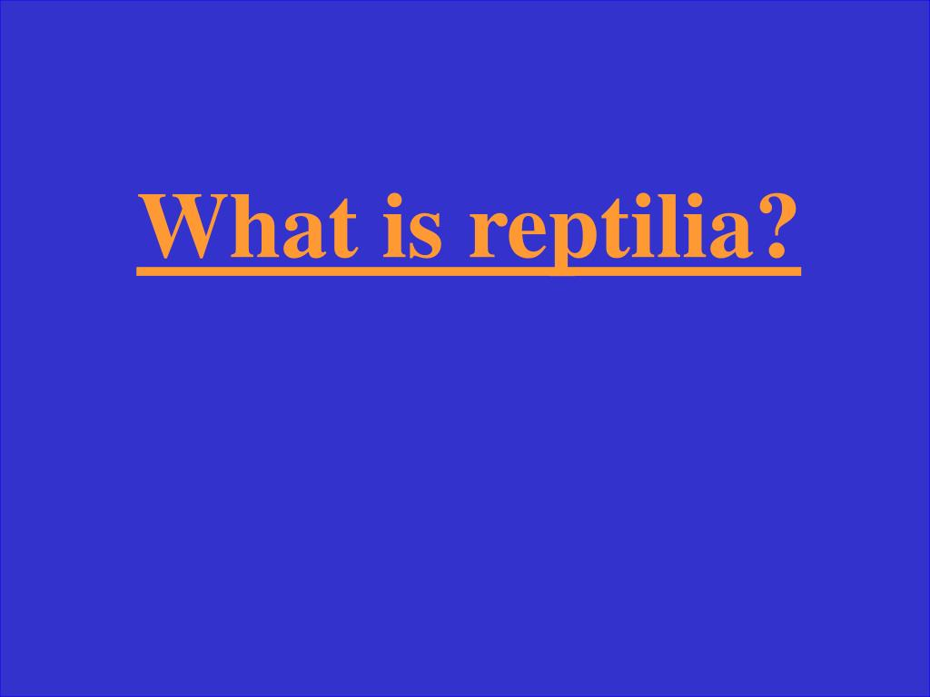 What is reptilia?