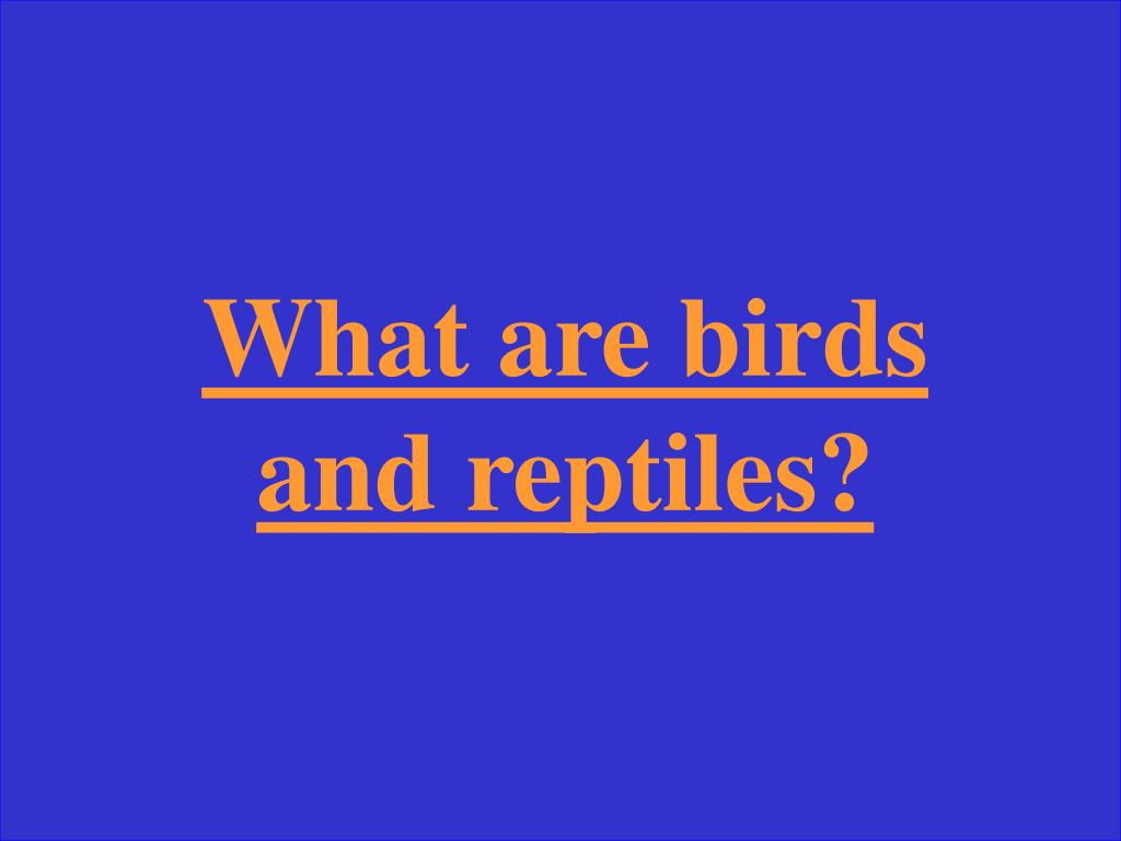 What are birds and reptiles?