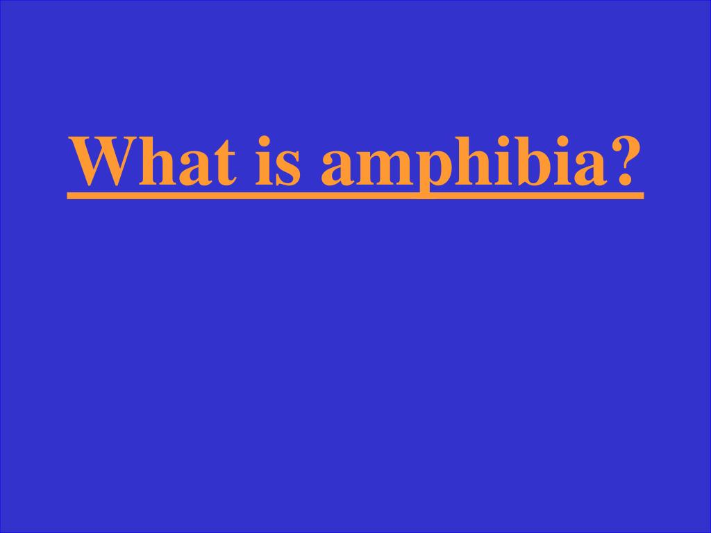 What is amphibia?