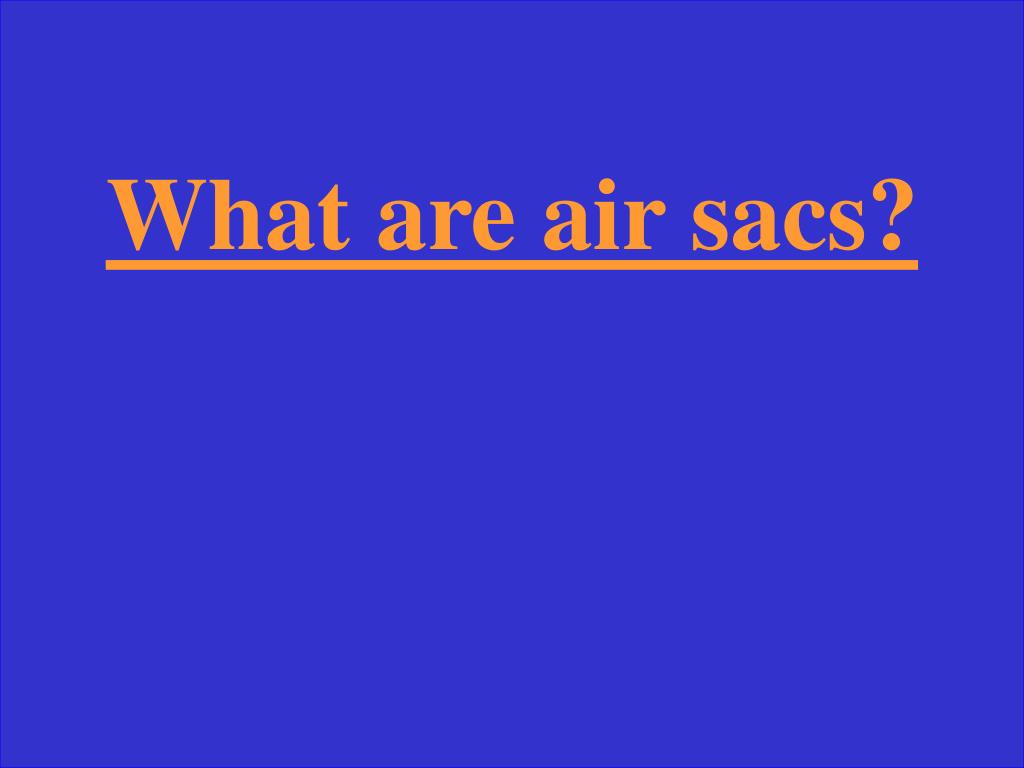 What are air sacs?