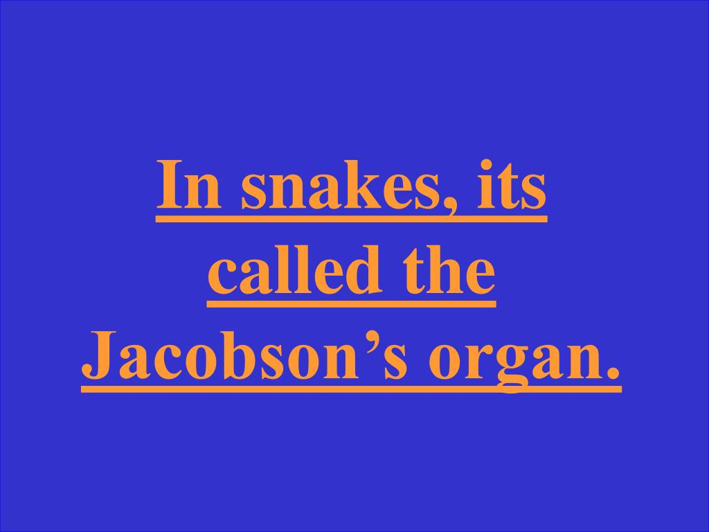 In snakes, its called the Jacobson's organ.