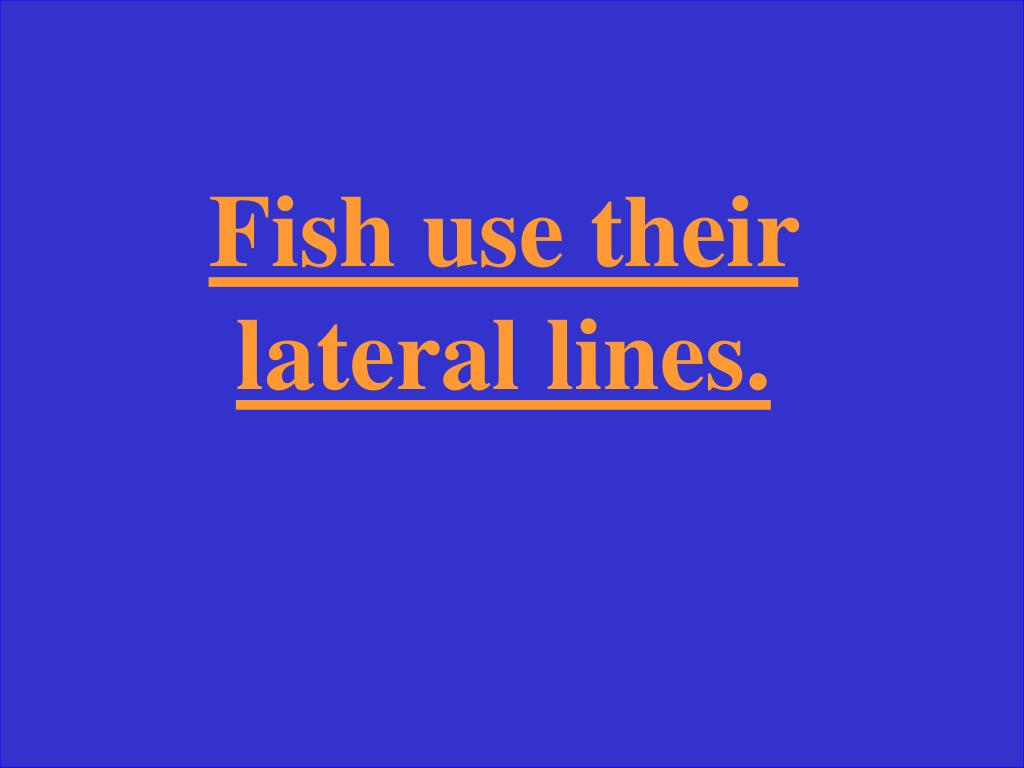 Fish use their lateral lines.
