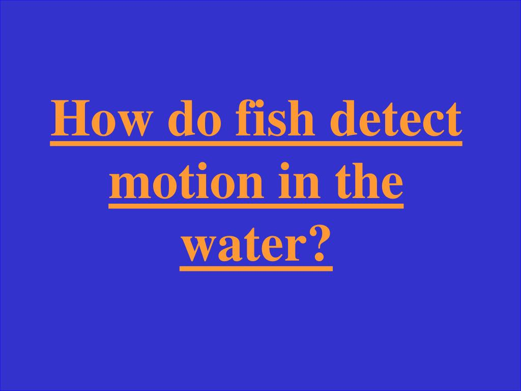 How do fish detect motion in the water?