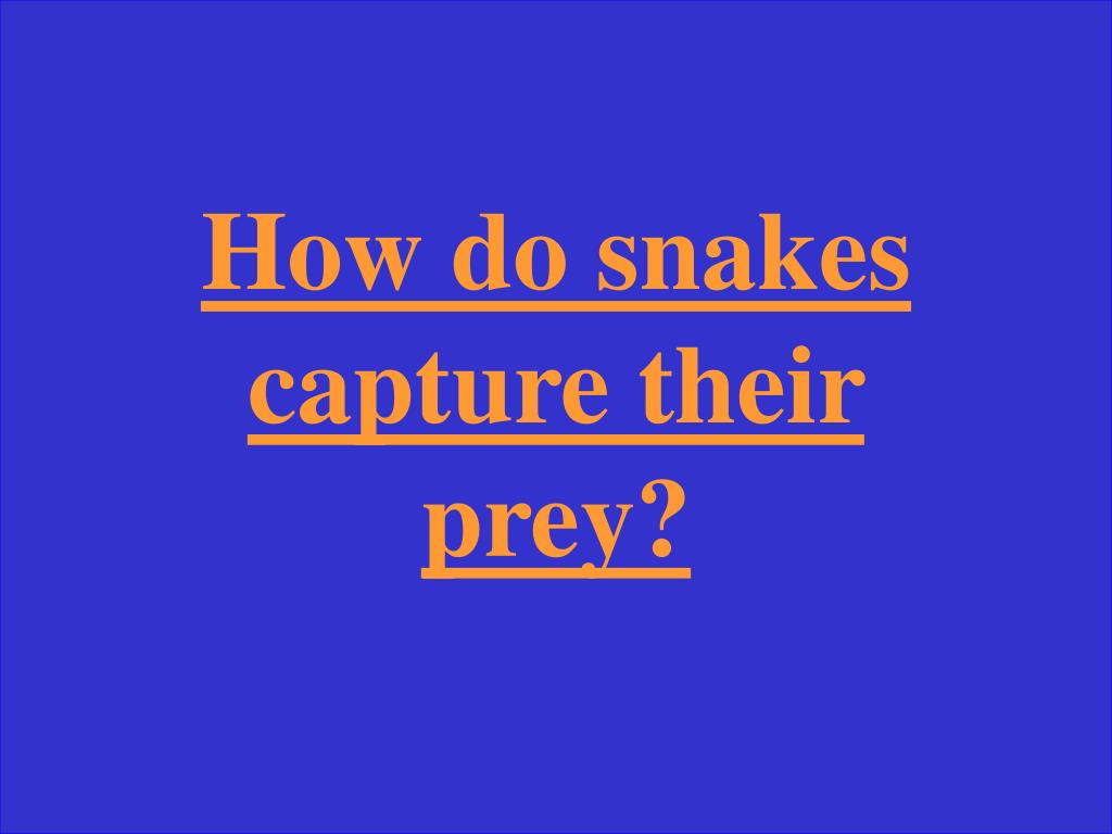 How do snakes capture their prey?