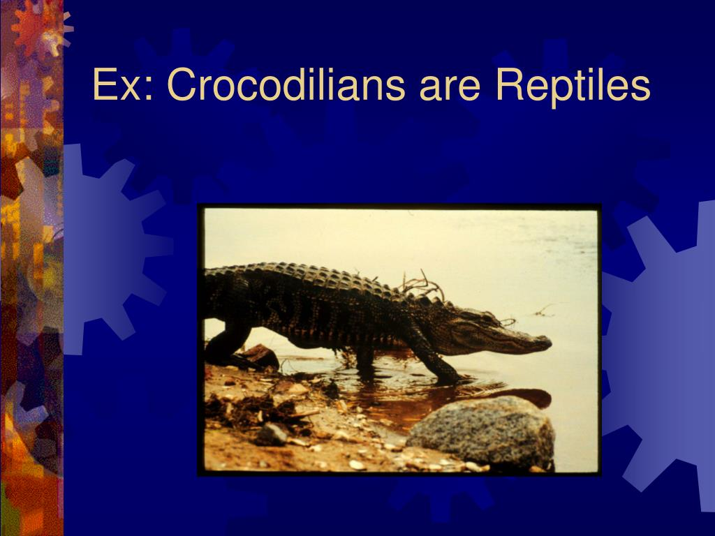Ex: Crocodilians are Reptiles