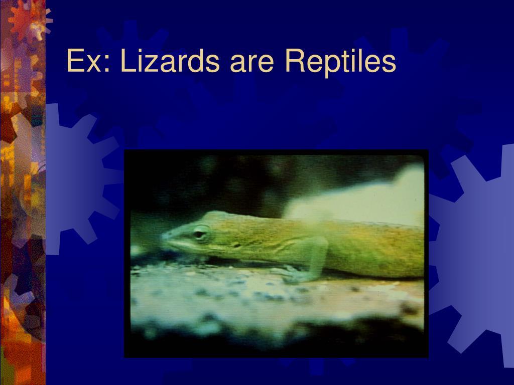 Ex: Lizards are Reptiles